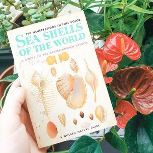 Rare Seashells Book